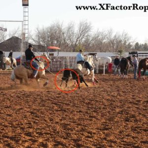 Pace Heeling Coaching Picture copy